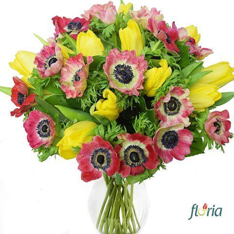 flori-anemone-pentru-anemona-2625