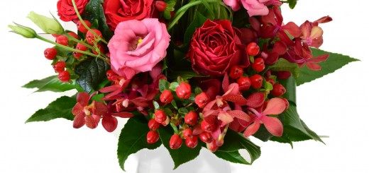 Floria_flori-bucurie